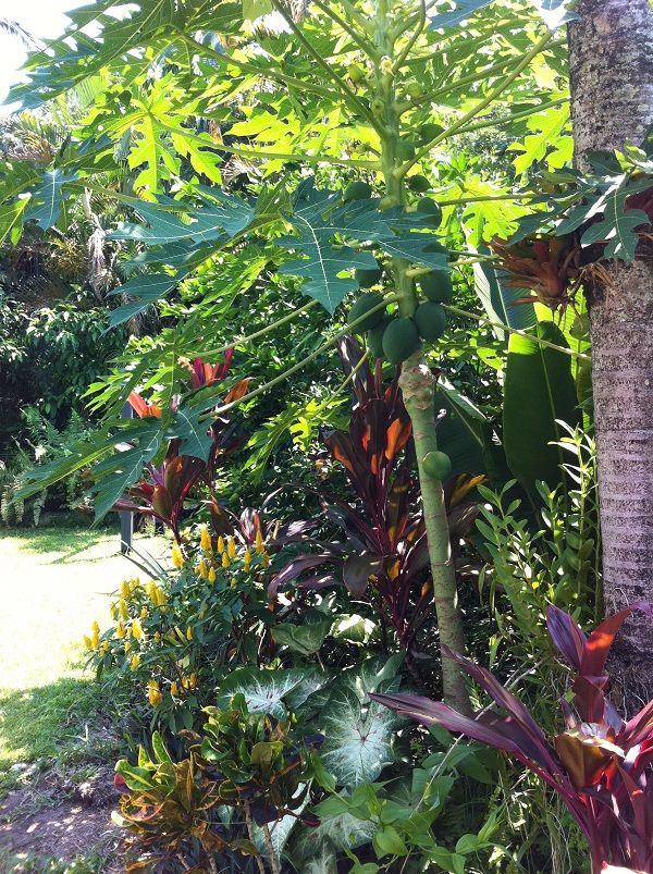 Tropical Outdoor Garden Design Ideas