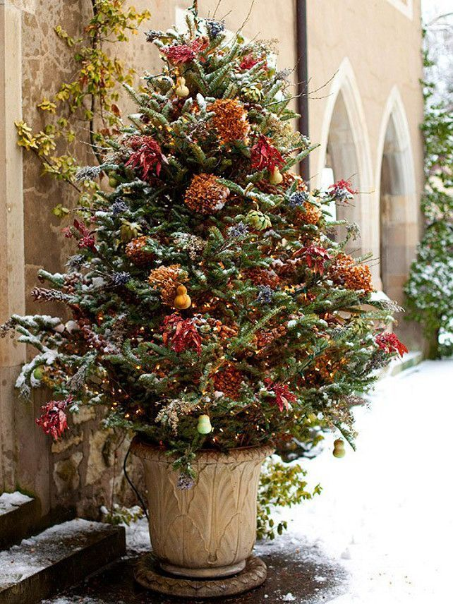 Natural Outdoor Christmas Tree