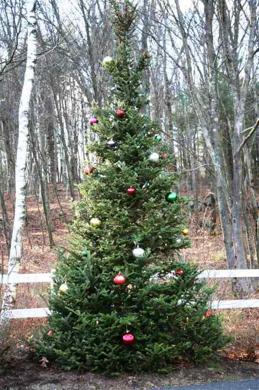 outdoor-decorated-christmas-tree