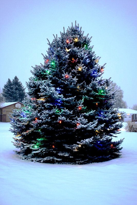 outdoor-christmas-tree-with-snow